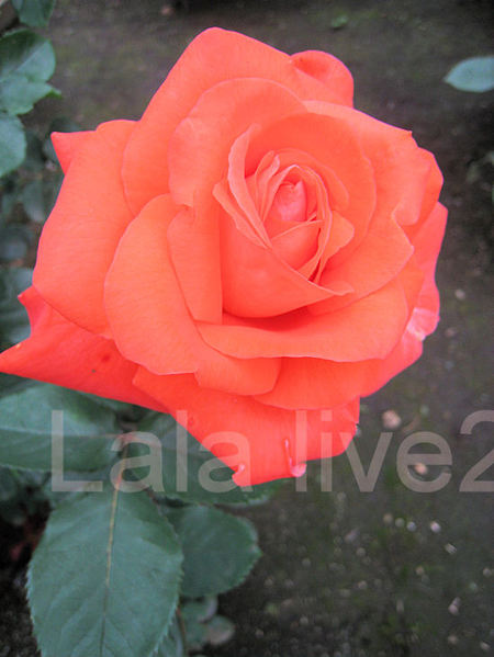 Lola20110526