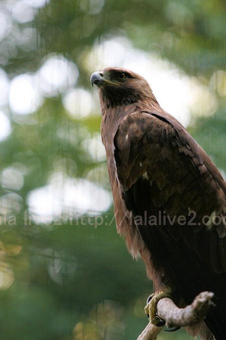 Eagle20110519