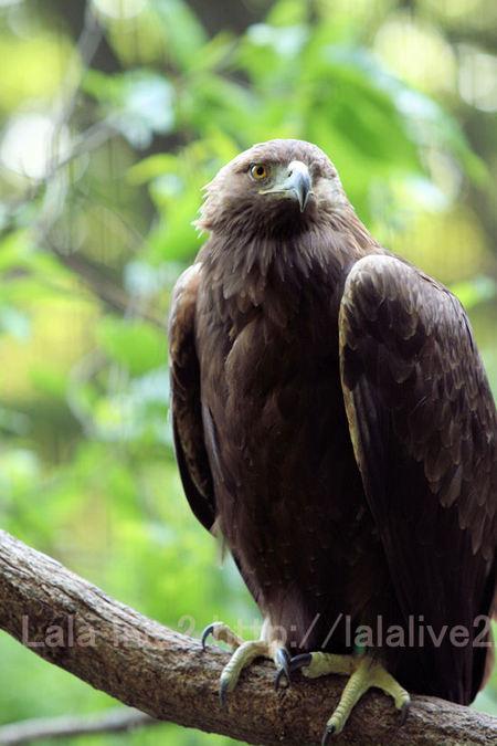 Eagle201105191