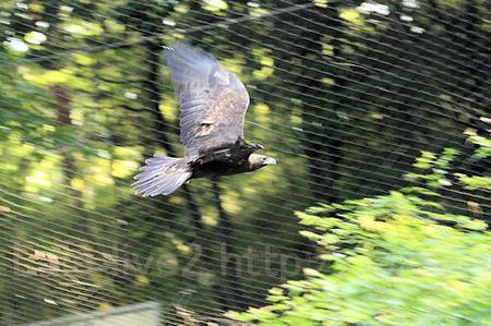 Eagle201105192_2