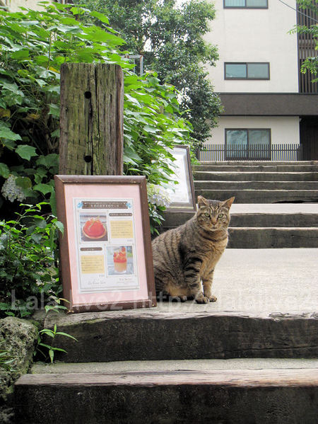 Kagurazaka20110616
