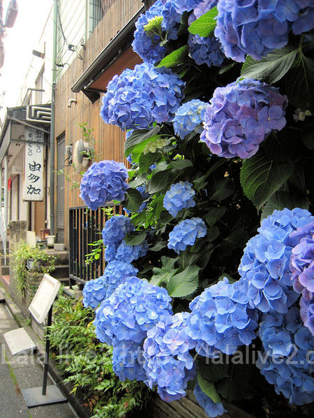 Kagurazaka201106161