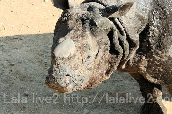 Rhino201105191_2