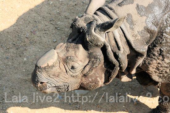 Rhino201105192_4