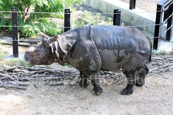 Rhino201105193