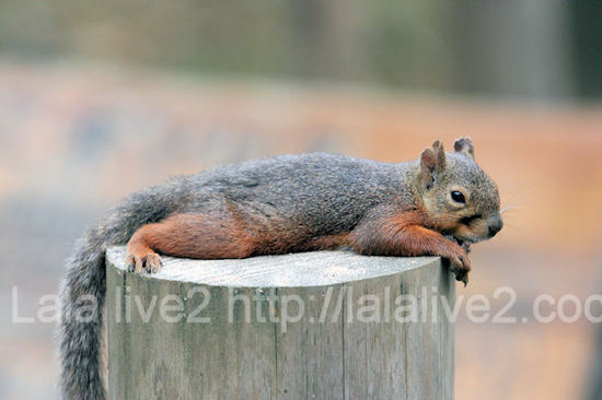 Squirrel201107281