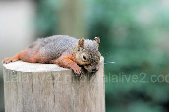 Squirrel201107282