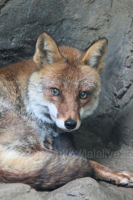 Fox20110728