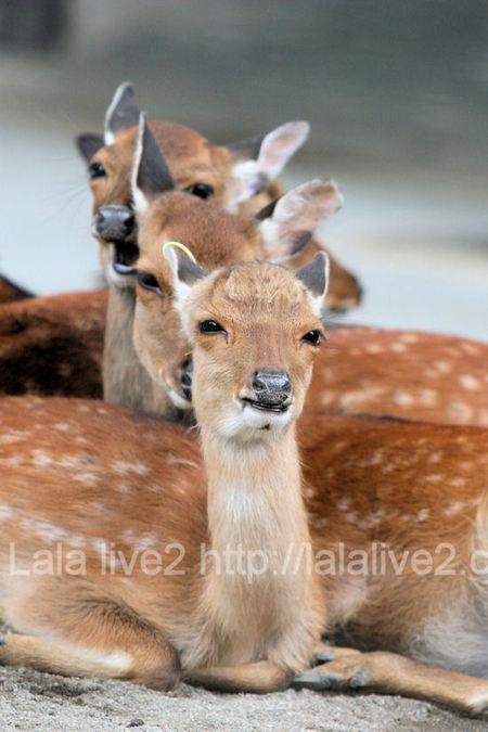 Deer201107281