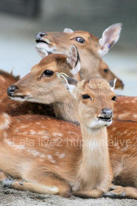 Deer201107282_2