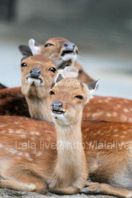 Deer201107283