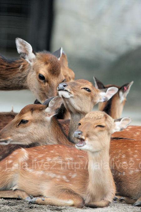 Deer201107284