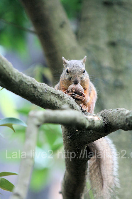 Squirrel201107284