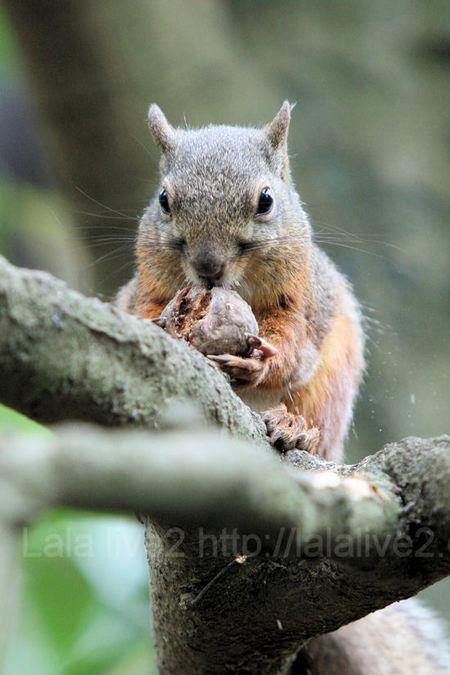 Squirrel201107285