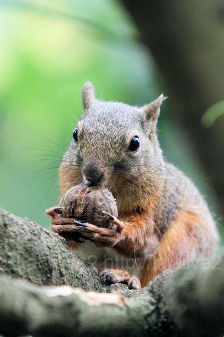 Squirrel201107286