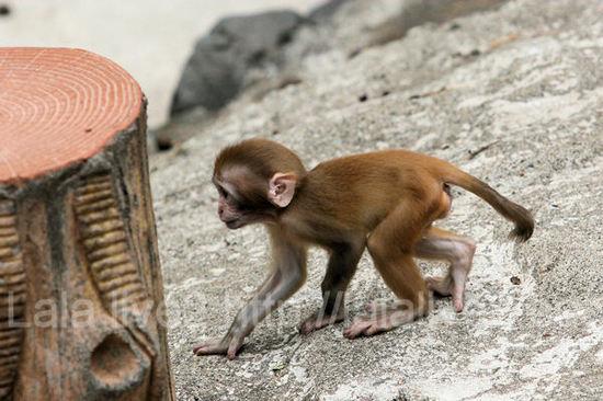 Monkey20110728