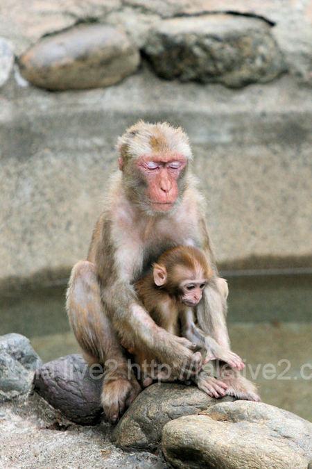 Monkey201107283