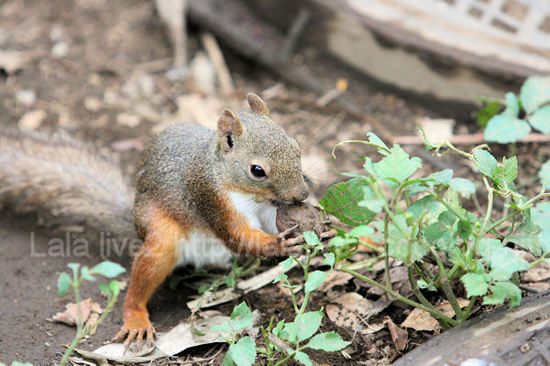 Squirrel2011072811
