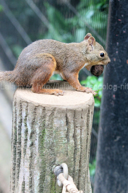 Squirrel2011072813