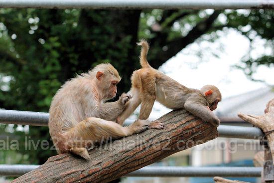 Monkey201107284