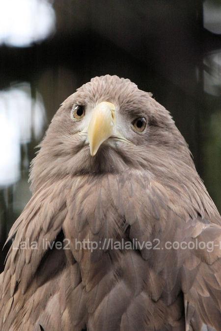 Eagle201103033