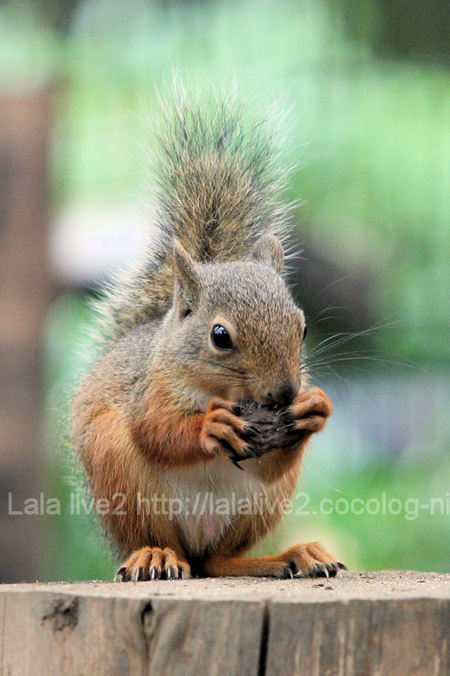Squirrel2011072814