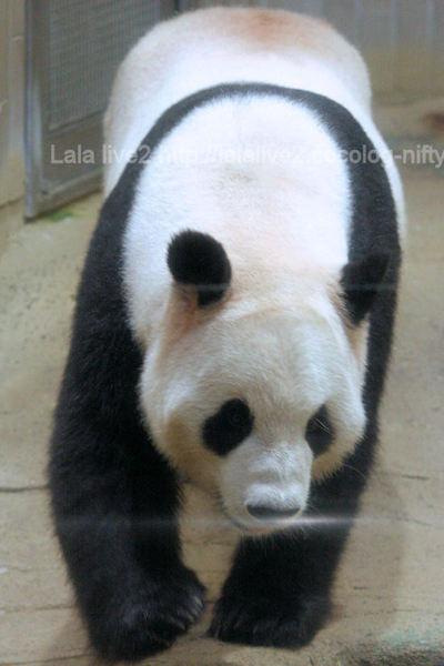 Pandariri201109063_2