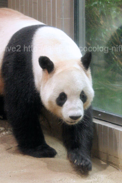 Pandariri20110906_3