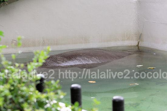 Hippo20110906_2