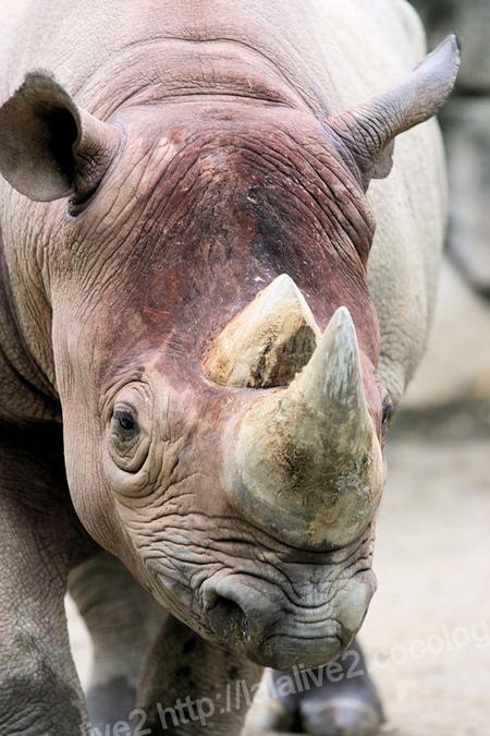 Rhino20110906