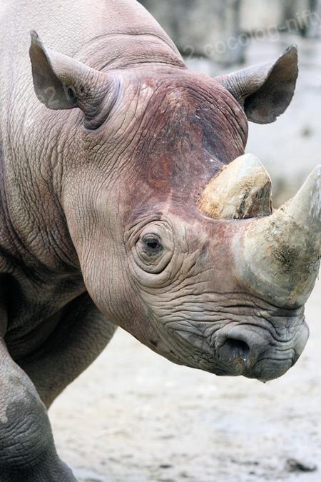 Rhino201109061