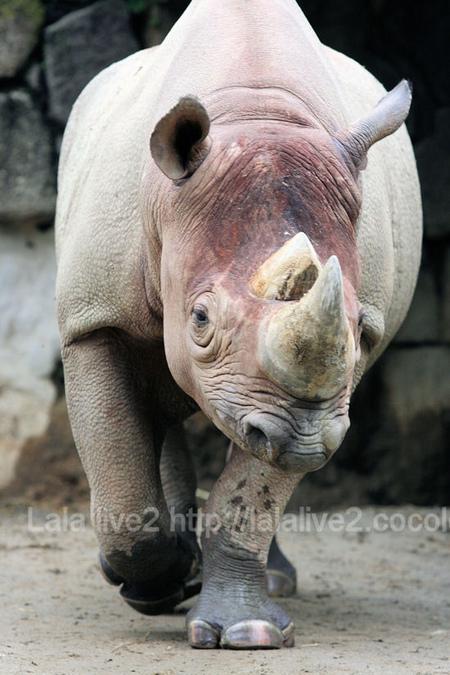 Rhino201109062