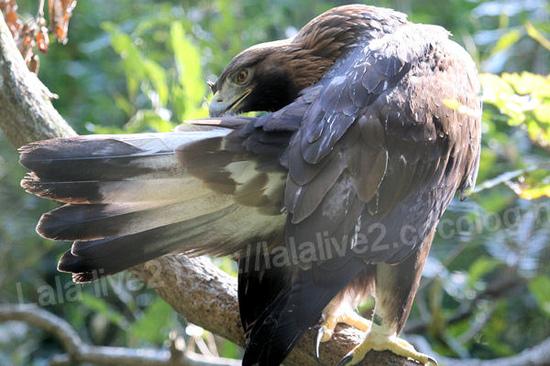 Eagle20111027