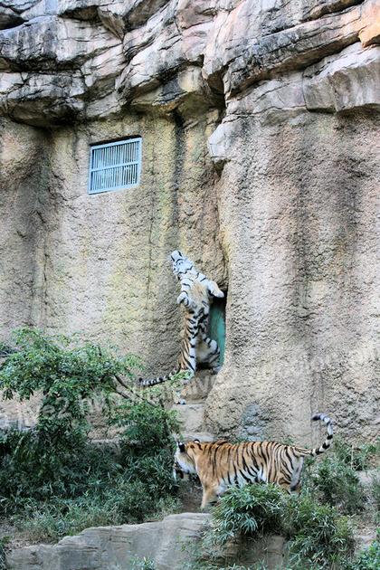 Tigers201110275_3