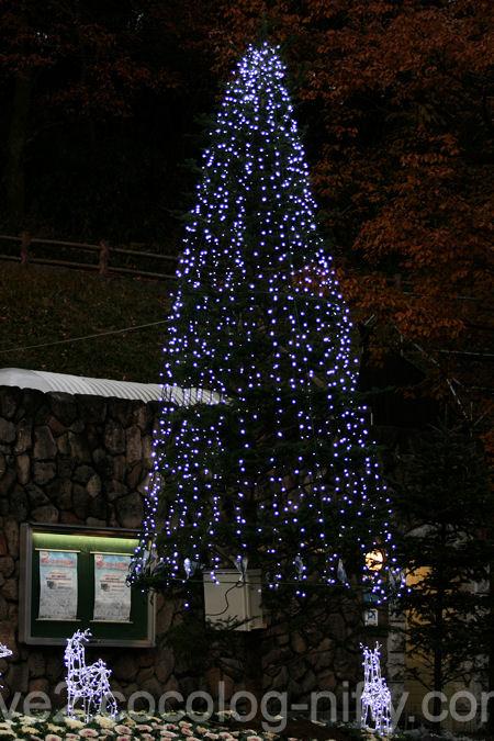 Lights201112152_4