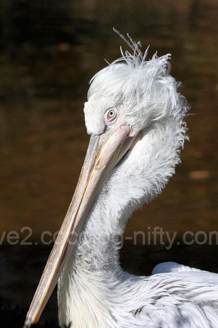 Pelican201201072_2