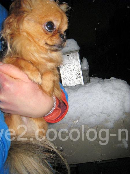 Snow201201231