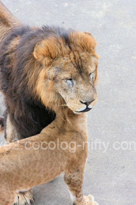 Lions201112153_2