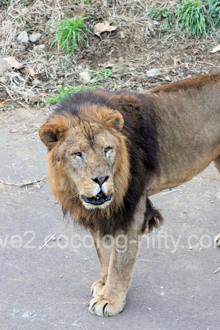 Lions201112155_2