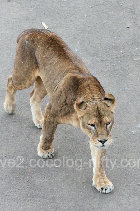 Lions201112158_2