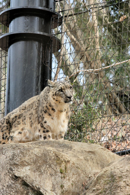 Snowleopard2012031614