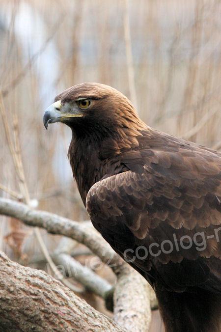 Eagle20120316