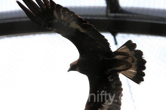 Eagle201203162