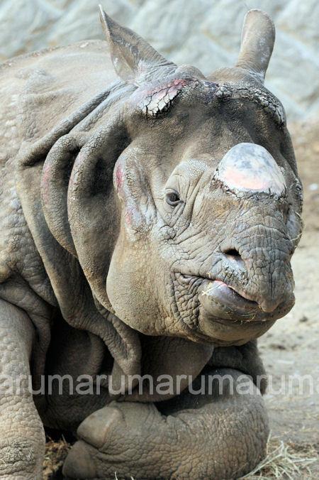 Rhino201203161