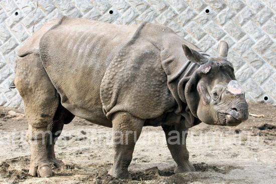 Rhino201203162
