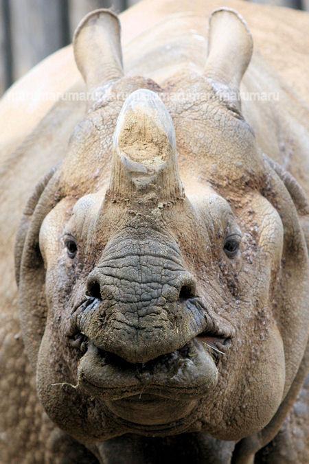 Rhino201203163