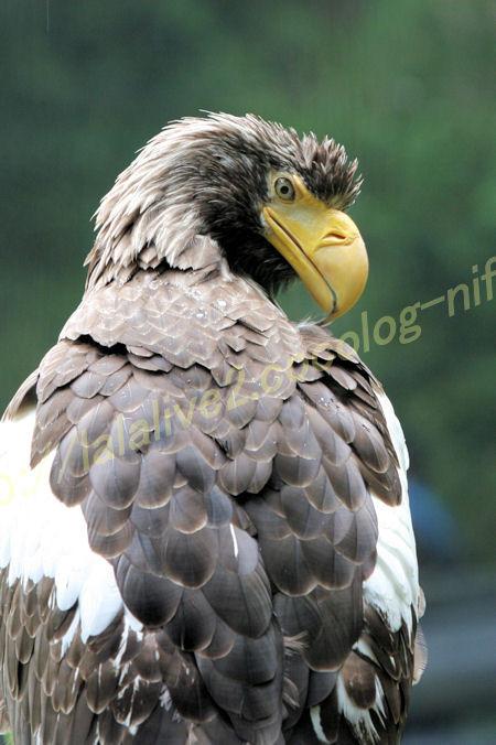 Eagle20120525