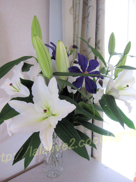 Lily201205311_2