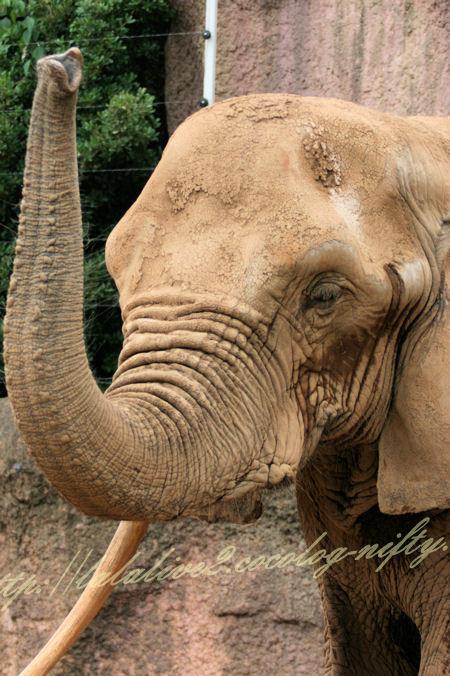 Elephant20120724