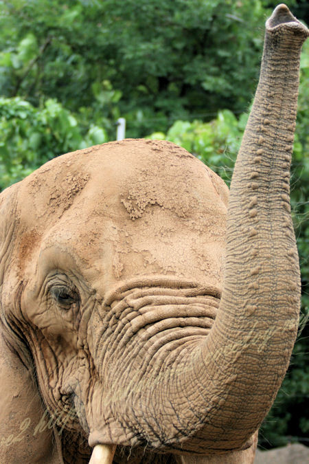 Elephant201207241